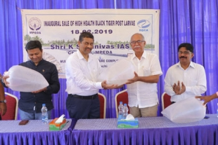 MPEDA starts supply of high-health tiger shrimp seed from Vallarpadam complex